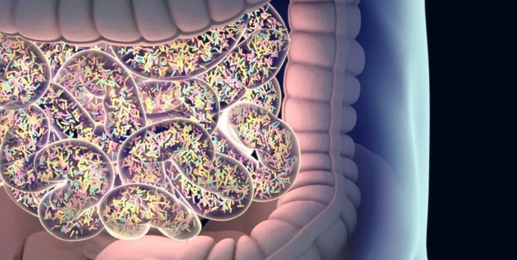 باکتری که برای ضدعفونی به کمک آنتی بیوتیک ها می آید
