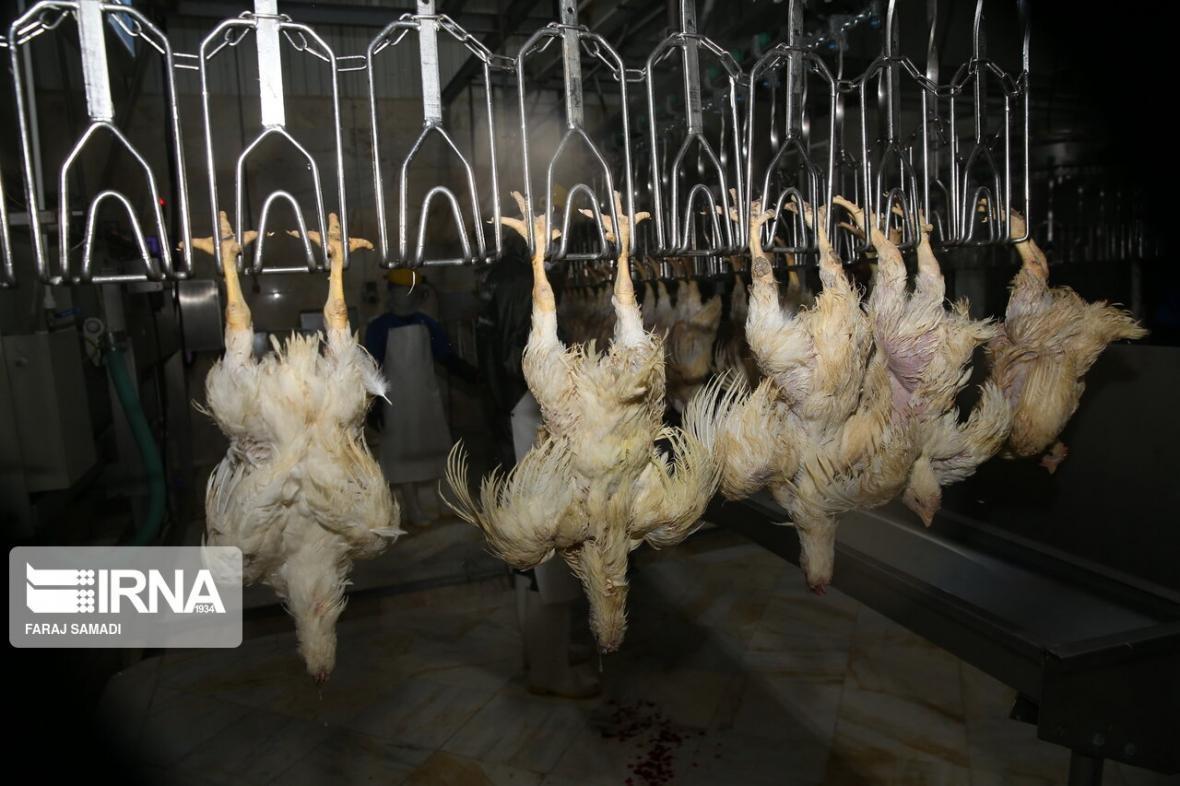 خبرنگاران قیمت مرغ در خراسان شمالی در سراشیبی سقوط